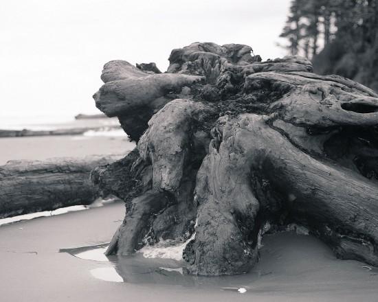Story-Image_driftwood-550x440