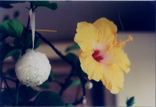 Snowball_flower