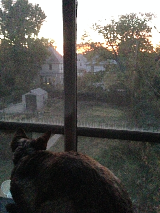 Windowcat