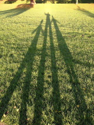 Shadows-265295_1280