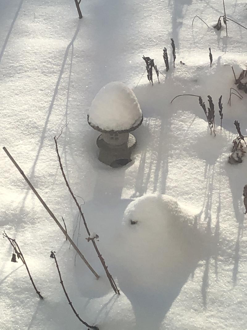 Dec snow 2019_2