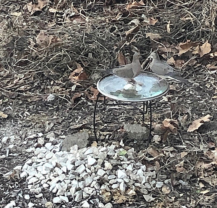 Mourning doves bird bath