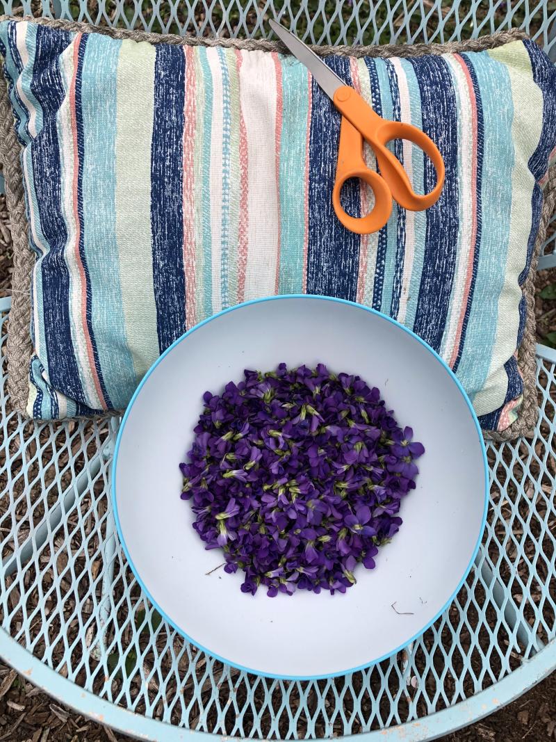 Harvesting violets