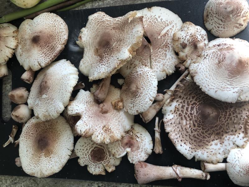 Mushroom haul