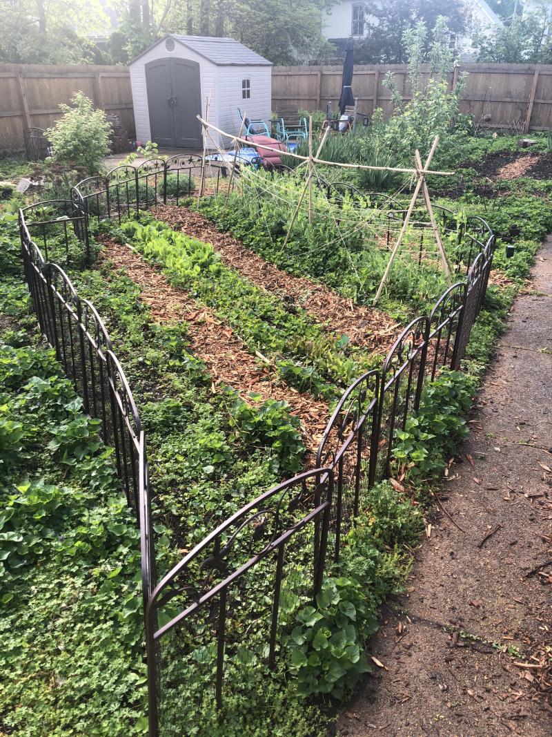 Spring Veggies Sprouting 21