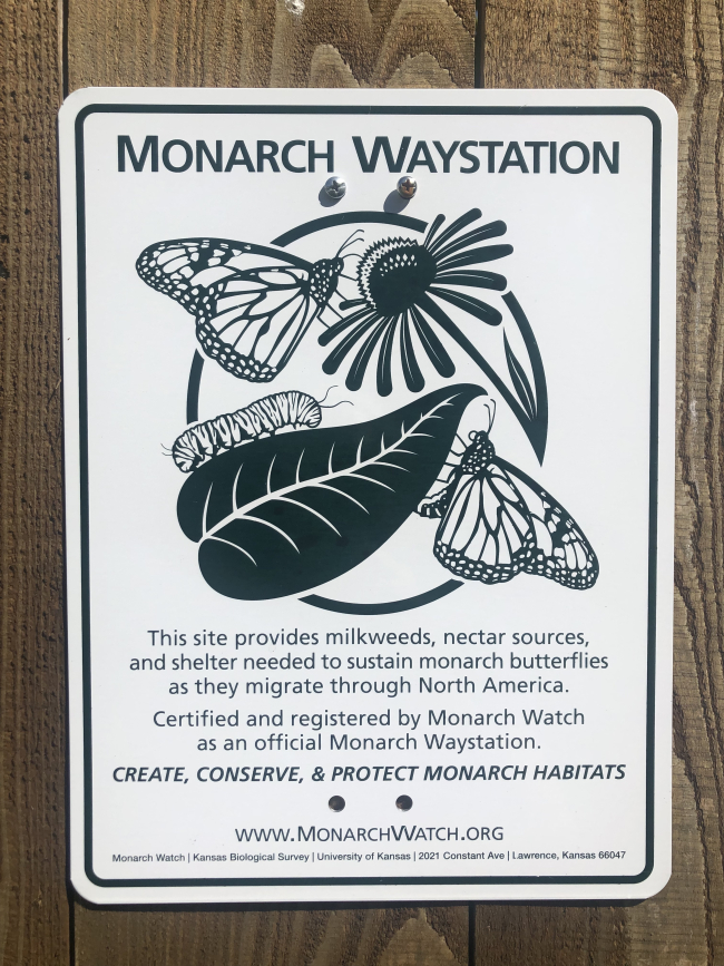 The Cat in the Flock Farm Named 'Monarch Waystation'