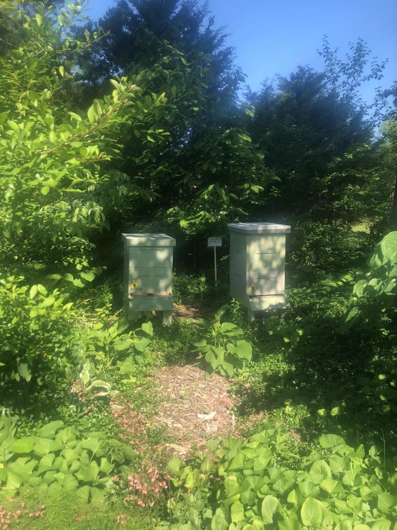 NPT_beehives